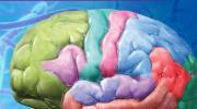 Cerveau de Discovery Education ISBN: 9782924025673